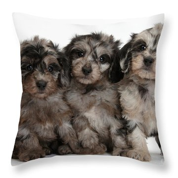 Daxiedoodle Poodle X Dachshund Puppies Throw Pillow by Mark Taylor