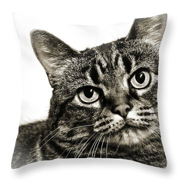 Day Dreamer Throw Pillow by Andee Design