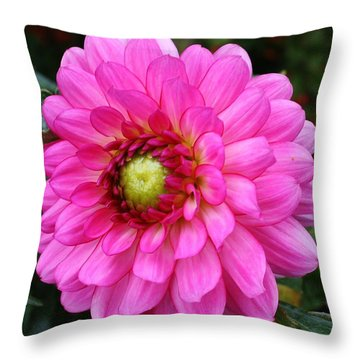 Dazzling Vibrant Pink Dahlia Throw Pillow by Bruce Bley