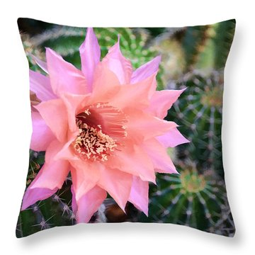 Decked Out In Pink Throw Pillow by Diane Wood
