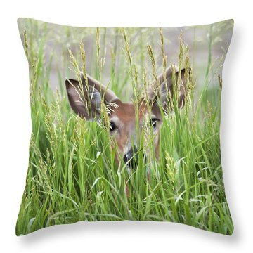 Deer In Hiding Throw Pillow by Art Whitton
