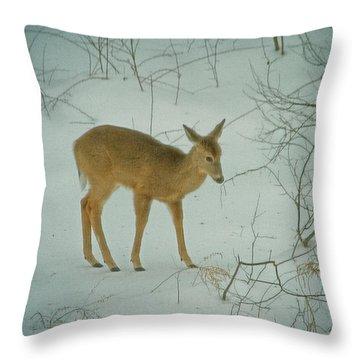Deer Winter Throw Pillow by Karol Livote