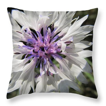 Throw Pillow featuring the photograph Delicate by Tina M Wenger