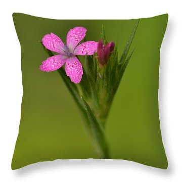 Throw Pillow featuring the photograph Deptford Pink by JD Grimes