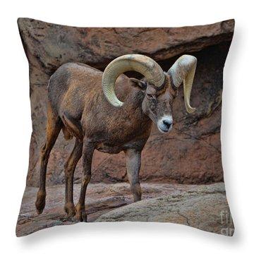 Desert Bighorn Sheep Ram I Throw Pillow