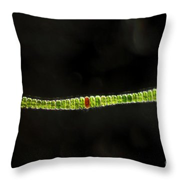 Desmidium Sp. Green Algae, Lm Throw Pillow by Ted Kinsman