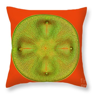 Diatom Aulacodiscus Formosus Throw Pillow