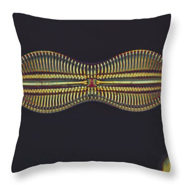 Diatom - Diploneis Crabro Throw Pillow by Eric V. Grave