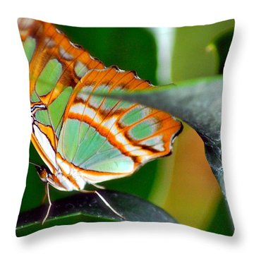 Throw Pillow featuring the photograph Dido Longwing Butterfly by Peggy Franz