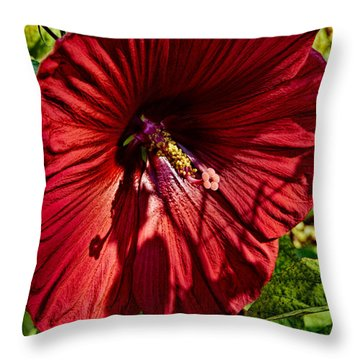 Dinner Plate Hibiscus Throw Pillow by Christopher Holmes
