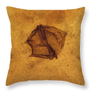 Dinoflagellate Fossil Throw Pillow by Eric V. Grave