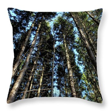 Throw Pillow featuring the photograph Dizzy In The Pines by Rachel Cohen