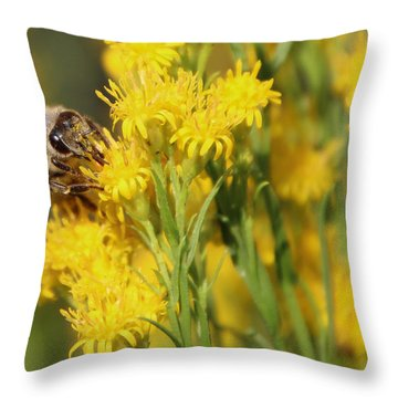 Do I Have Something On My Face Throw Pillow by Heidi Smith