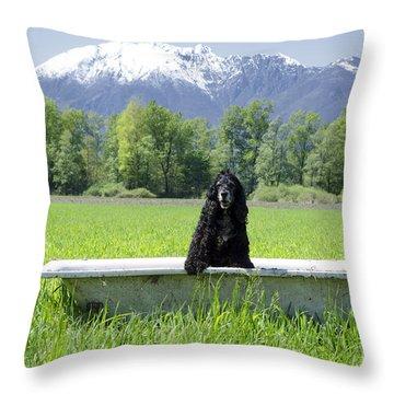 Dog In Bathtub Throw Pillow