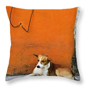 Dog Near Colorful Wall In Mexican Village Throw Pillow by Elena Elisseeva