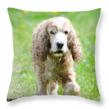 Dog On The Green Field Throw Pillow by Mats Silvan