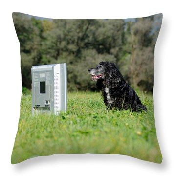 Dog Watching Tv Throw Pillow