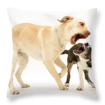 Dogs Playing Throw Pillow by Mark Taylor