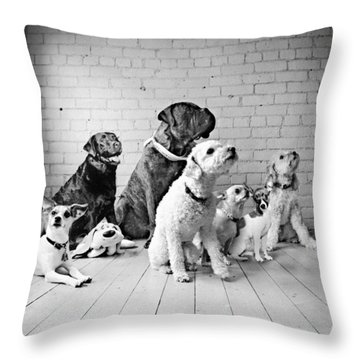 Dogs Watching At A Spot Throw Pillow by Sumit Mehndiratta