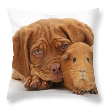 Dogue De Bordeaux Puppy With Red Guinea Throw Pillow by Mark Taylor