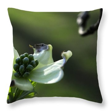 Dogwood Jewels Throw Pillow by Wanda Brandon