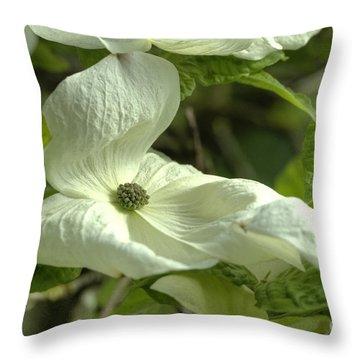 Dogwood Throw Pillow by Rod Wiens