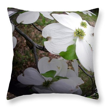 Dogwood Under Glass Throw Pillow by Pamela Hyde Wilson