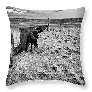 Doing What Dogs Always Do Throw Pillow by John Farnan