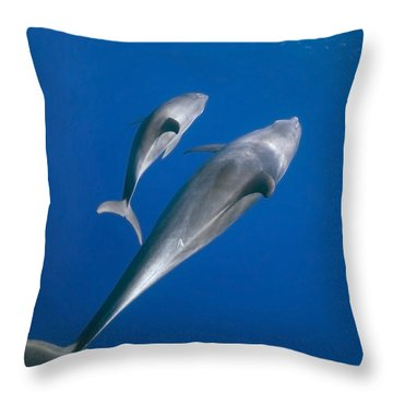 Dolphin And A  Cub Throw Pillow by Tom Peled