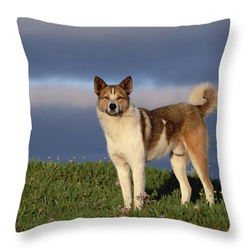 Domestic Dog Canis Familiaris, Taymyr Throw Pillow by Konrad Wothe