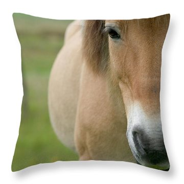 Domestic Horse Equus Caballus Portrait Throw Pillow by Cyril Ruoso