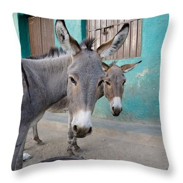 Donkeys, Harar, Ethiopia, Africa Throw Pillow by David DuChemin