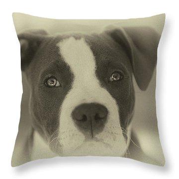 Pitbull Throw Pillows