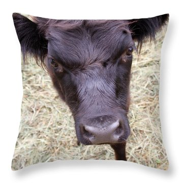 Don't Mess With Me Throw Pillow by Karol Livote
