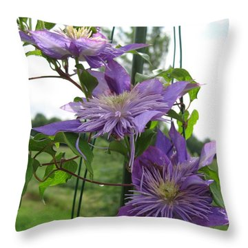 Double Clematis Named Crystal Fountain Throw Pillow by J McCombie