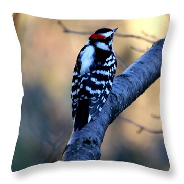 Throw Pillow featuring the photograph Downy Woodpecker by Elizabeth Winter