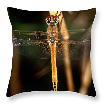 Throw Pillow featuring the photograph Dragon Fly 1 by Pedro Cardona