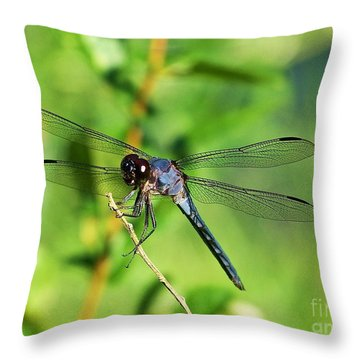 Throw Pillow featuring the photograph Dragon Fly  by Eve Spring