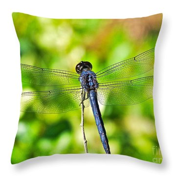 Throw Pillow featuring the photograph Dragon Fly Spread by Eve Spring