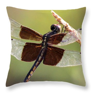 Throw Pillow featuring the photograph Dragonfly Closeup by Kathy  White