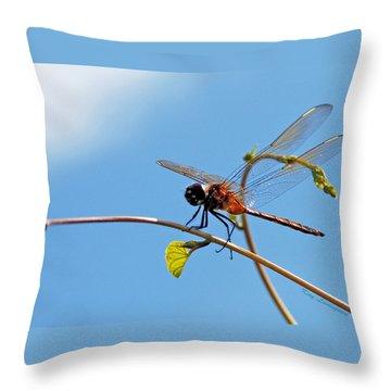 Dragonfly On A Vine Throw Pillow