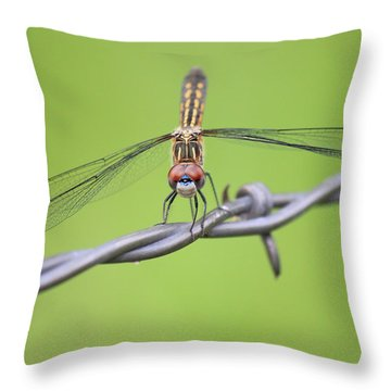 Throw Pillow featuring the photograph Dragonfly On Barbed Wire by Penny Meyers