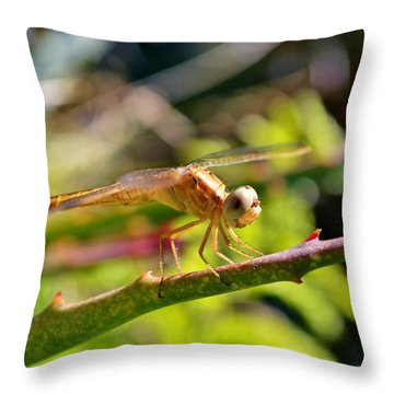 Throw Pillow featuring the photograph Dragonfly by Werner Lehmann