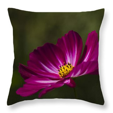 Dreamy Pink Cosmos Throw Pillow by Clare Bambers