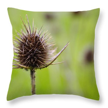 Dried Thistle Throw Pillow by Carlos Caetano