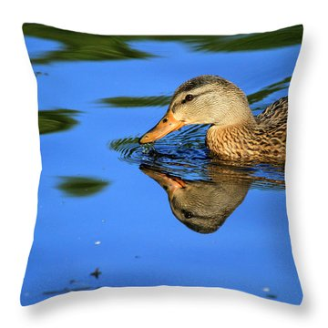 Duck Reflects Throw Pillow by Karol Livote