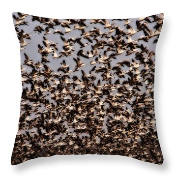 Duck Wall Throw Pillow