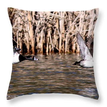 Ducks - Ring Neck - Hold Up Throw Pillow by Travis Truelove