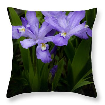 Dwarf Crested Iris Throw Pillow by Rob Travis