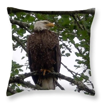 Eagle At Hog Bay Maine Throw Pillow by Francine Frank